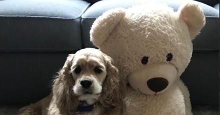 Ce chien a surveillé son doudou dans la machine à laver pour être sûr que tout allait bien (Vidéo)