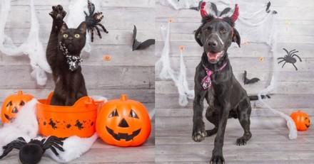 Zoom sur les chats et chiens noirs à adopter à la SPA !