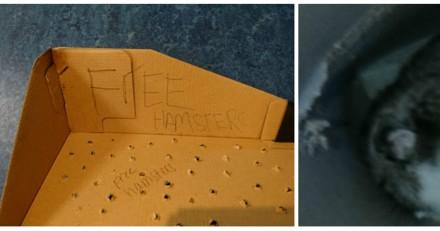 Il trouve un carton avec des hamsters abandonnés, puis il voit un détail très choquant