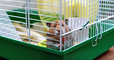 Une fillette emmène son hamster qui ne bouge plus chez le vétérinaire, il découvre quelque chose de très bizarre