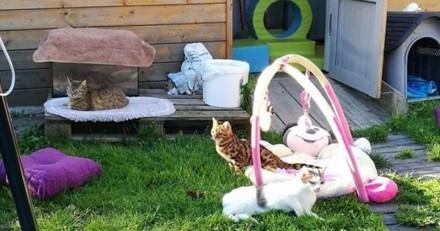 Focus sur Handi'cats, l'association qui prend soin des animaux handicapés (mais pas seulement)
