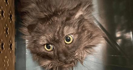 Une femme fait 10h de route pour venir en aide à une chatte. Quelques jours plus tard une surprise l'attend