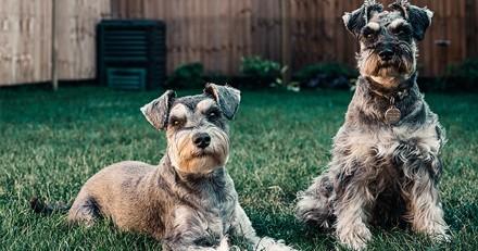 Notre sélection de harnais pour chien à moins de 40€