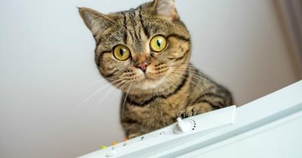 Son chat miaule devant le frigo : il regarde derrière, pousse un cri et appelle au secours !
