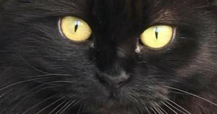 Après avoir eu deux chats de race, elle adopte une chatte noire des rues : leur histoire est magnifique