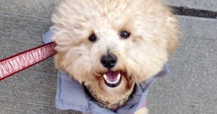 Après la mort de sa chienne, elle décide de la cloner
