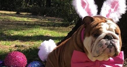 Le nouveau «lapin» de Pâques de Cadbury n'est pas du tout un lapin