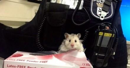 La police de Berlin adopte un adorable hamster égaré et en fait un agent