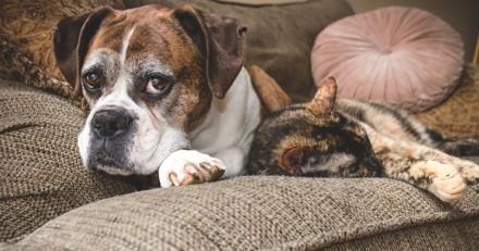 Peut-on léguer son héritage à son chien ou son chat ?