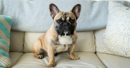La hernie discale chez le chien : cause, traitement, prévention