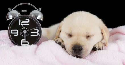 Passage à l'heure d'hiver : comment les chiens vivent-ils ce changement ?