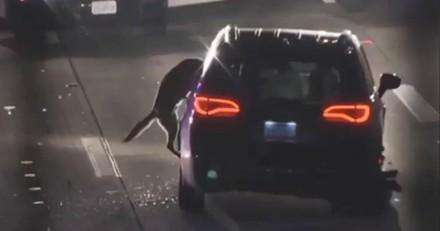Spectaculaire ! Un Malinois fonce vers une voiture : 54 secondes plus tard, tout s'arrête !