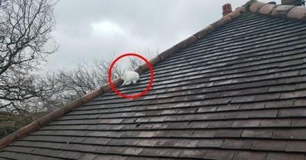 Porté disparu, un lapin a mystérieusement été retrouvé sur le toit d'une maison