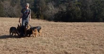Il impressionne tout le monde en promenant 5 chiens sans laisse : mais la vérité est nettement plus choquante