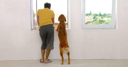 Covid-19 : Pabete.com devient gratuit pour permettre aux personnes à risque de faire garder leurs animaux