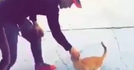 Il caresse un chat puis lui donne un violent coup de pied : ce qui se passe ensuite va très vite