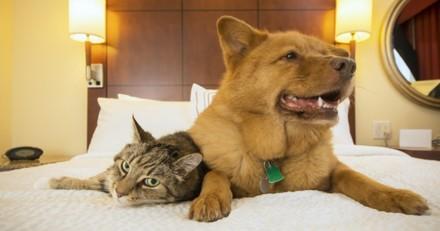 Quel hébergement choisir quand on part en vacances avec son chien / chat ?