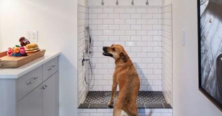 Inspirez-vous de ces aménagements pour chien farfelus tout droit venus des Etats-Unis (Photos)