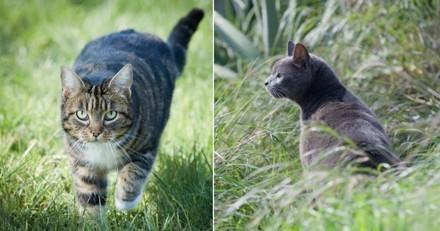 Comment photographier ses animaux de compagnie en extérieur ?