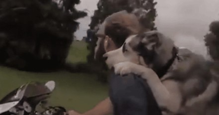 Ce Husky adore faire de la moto avec son maître (Vidéo du jour)