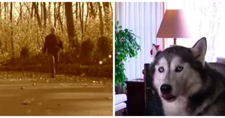 Il retrouve son chien perdu depuis 2 ans, la réaction du toutou le fait exploser de rire (Vidéo)