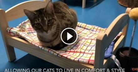Quand IKEA offre des lits de poupée aux chats d'un refuge…