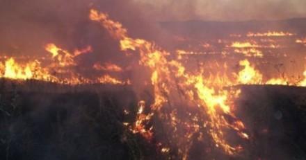 Incendie à Madrid : quelques jours plus tard, des voisins découvrent une créature parmi les cendres