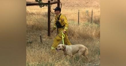 Un pompier sauve un chien d'un incendie et retrouve ses maîtres grâce à Facebook !