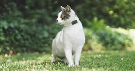 Peur de perdre votre chien ou votre chat ? Voici le tracker GPS qu'il vous faut !