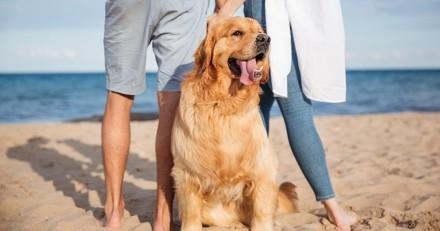 Exclu Wamiz : Les chiens partent plus en vacances que les chats
