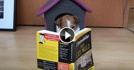 Ce chien est… agent immobilier !