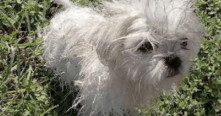 Il décide de cloner son chien pour ne pas le voir mourir : quelques mois plus tard, c'est la panique totale