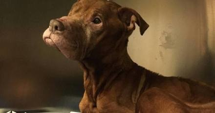 Les policiers sauvent un chien enfermé depuis 9 ans dans une cave : ce qu'ils voient dans l'obscurité est un choc