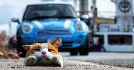 Ce japonais photographie des chats en train de s'amuser sans se soucier de ce qui les entoure