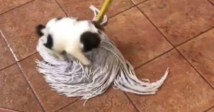 En passant la serpillère, cette femme éclate de rire en voyant ce fait son petit chiot (Vidéo)