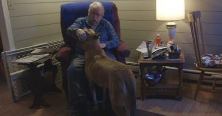 """Accusé à tort de meurtre, ce """"chien d'assistance"""" a échappé de justesse à l'euthanasie"""