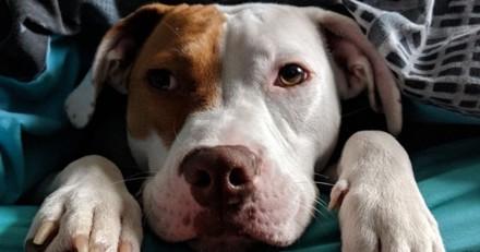 Après 5 abandons, ce chien sourd communique avec sa famille pour la vie grâce au langage des signes