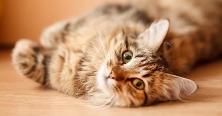 2 astuces pour faire bouger son chat à l'intérieur (Vidéo)