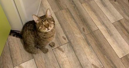 Cécité chez le chat : tout ce qu'il faut savoir sur le quotidien avec un chat aveugle !