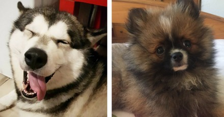 Journée Mondiale du Chien : 30 belles photos des chiens des lecteurs de Wamiz !
