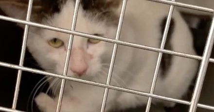 Le refuge prévient que ce chat est agressif, quand elle arrive à la maison elle comprend toute la vérité (vidéo)