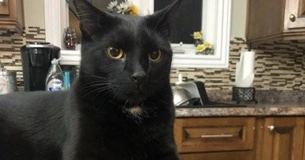 En pleine nuit, son chat grimpe sur son torse et ne veut plus le lâcher : il se lève et découvre la terrifiante vérité