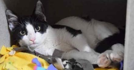 Cette femme sans-abri a pris de gros risques pour sauver un chat torturé par des junkies