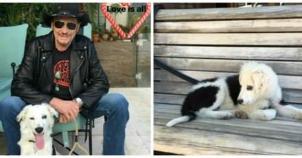 Que devient Cheyenne la chienne de Johnny Hallyday ?