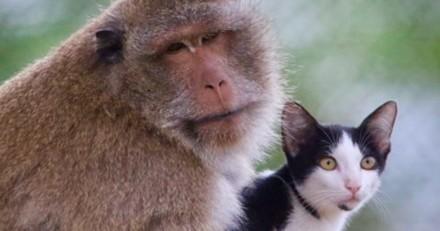 Incroyable ! Ce singe rescapé a adopté… un chat errant (Photos)
