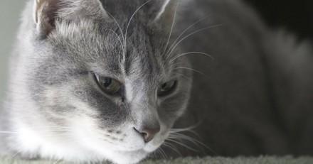 6 mois de prison pour un assassin de chats récidiviste