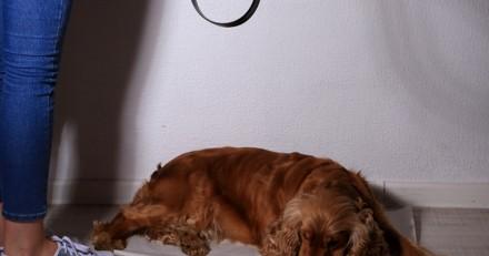 Niort : 15 mois de prison pour avoir battu son chien à mort