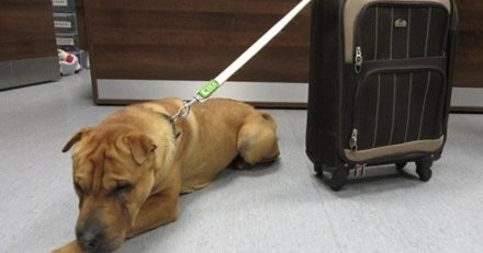 """Elle achète un chien sur internet, quand elle le rencontre elle le trouve """"indiscipliné"""" et commet le pire des actes"""
