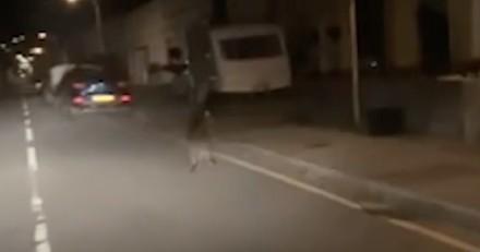 Il rentre de son travail chez McDonald's et aperçoit un chien : Il réalise vite qu'il se trompe totalement