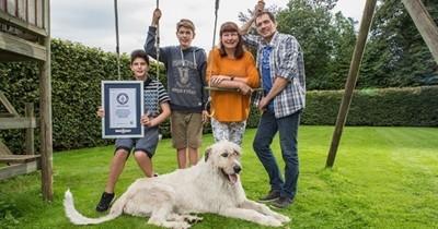 Voici Keon, le chien qui a la plus grande queue du monde : elle mesure plus de 76 centimètres !